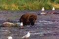 Bear Test