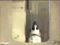 Gargling Dog
