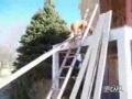 Dog Climbs Ladder