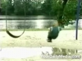Kid Falls Off Swing