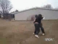 Backyard Fight Ends In Knockout