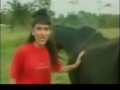 Horse Poops On Reporter