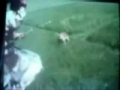 When Animals Attack -- Tiger strikes a hunter