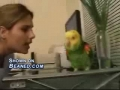 Oscar the parrot can sing