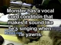 A cat who loves to sing