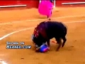 Bull fighter gets what he deserves