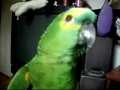A funny laughing parrot