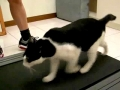 Cats On Treadmills