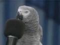 GENIUS BIRD