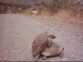 live! turtle rape