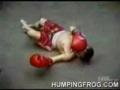 midgets thai boxing