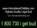 Big Legal Weed produced by International Oddities
