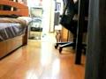 [ Clip ] Stalking cat