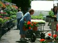 Looking At Garden Supply